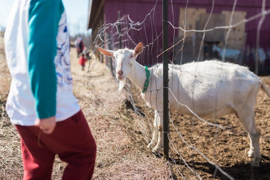 oak leaf dairy goat farm march 6th-40