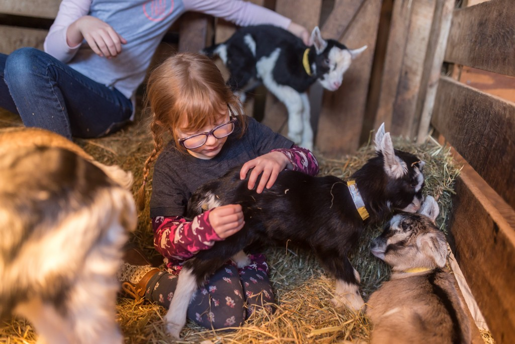 oak leaf dairy goat farm march 6th-55