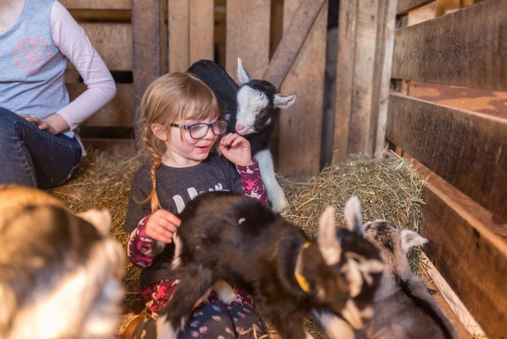 oak leaf dairy goat farm march 6th-58