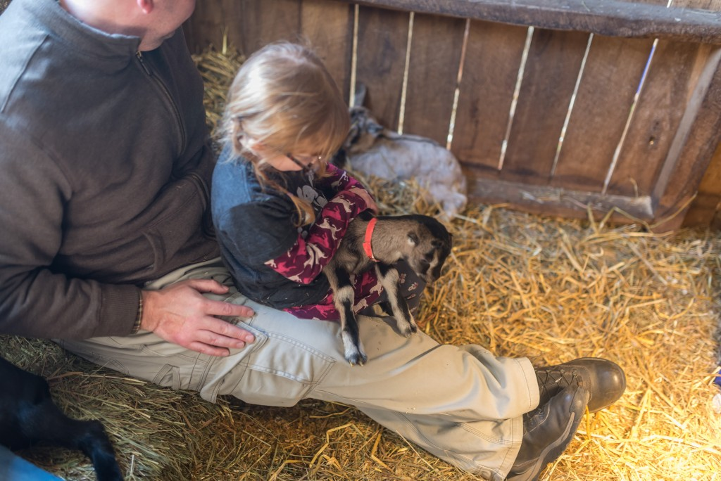 oak leaf dairy goat farm march 6th-62