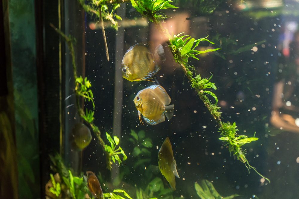 linc aquarium-11