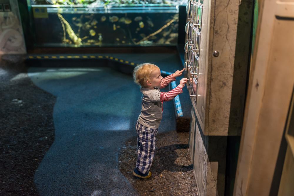 linc aquarium-13