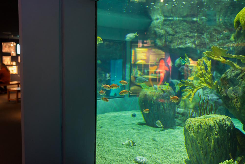 linc aquarium-15
