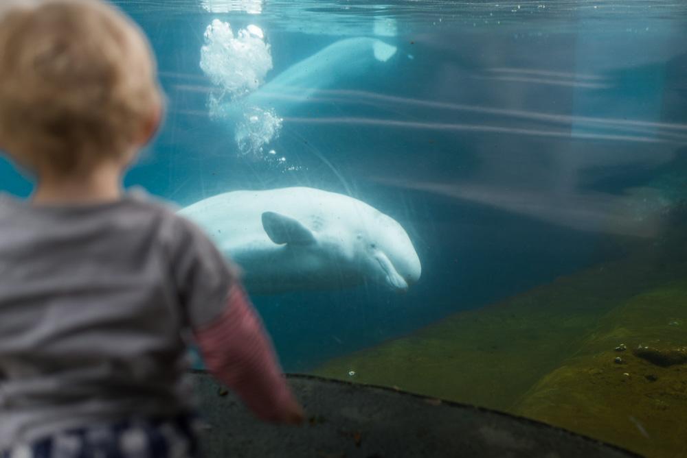 linc aquarium-2