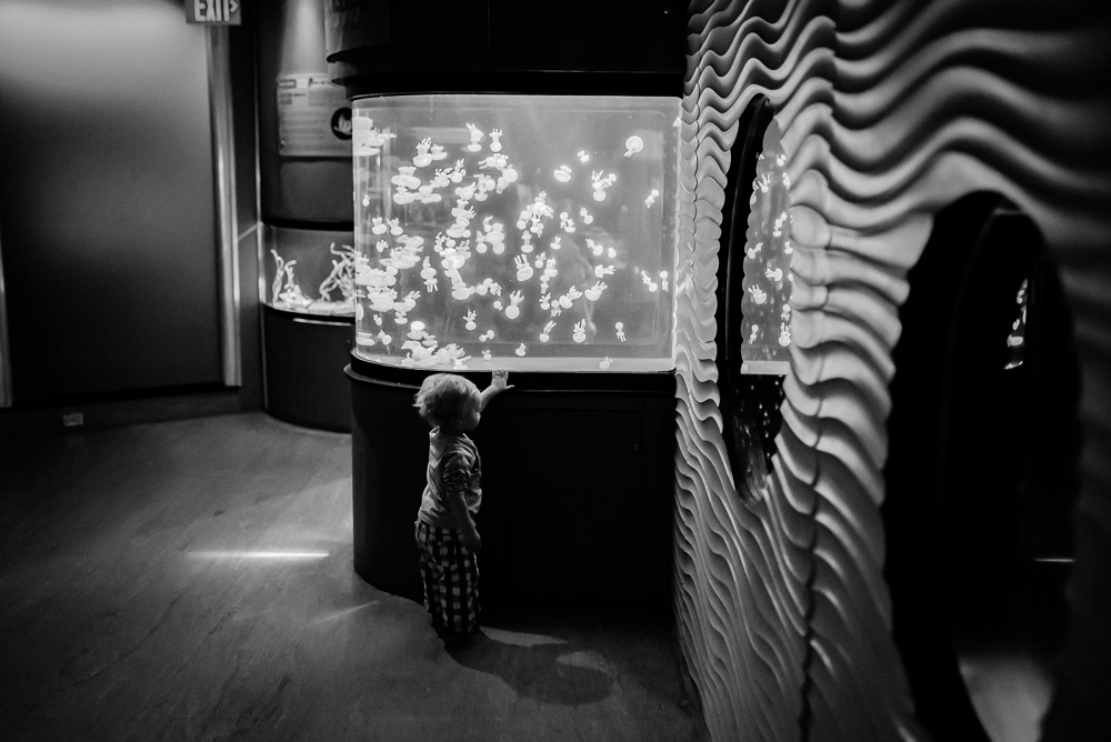 linc aquarium-21