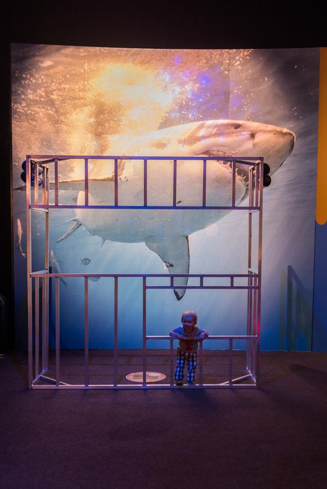 linc aquarium-30