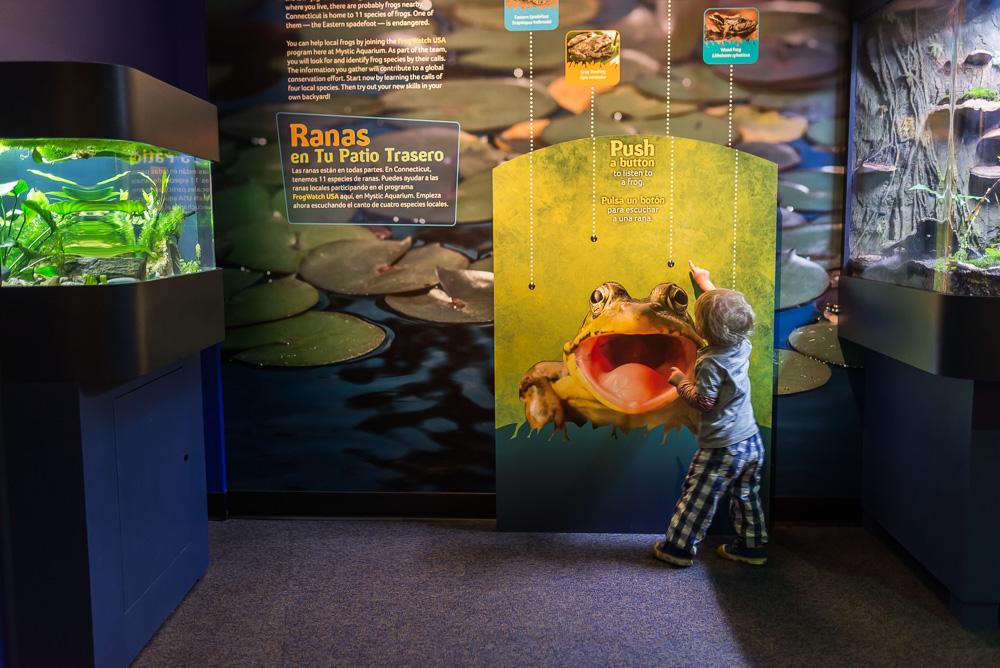 linc aquarium-32