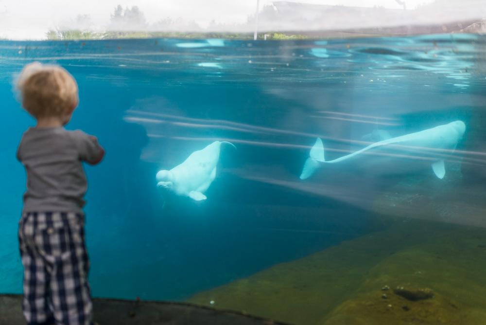 linc aquarium-7