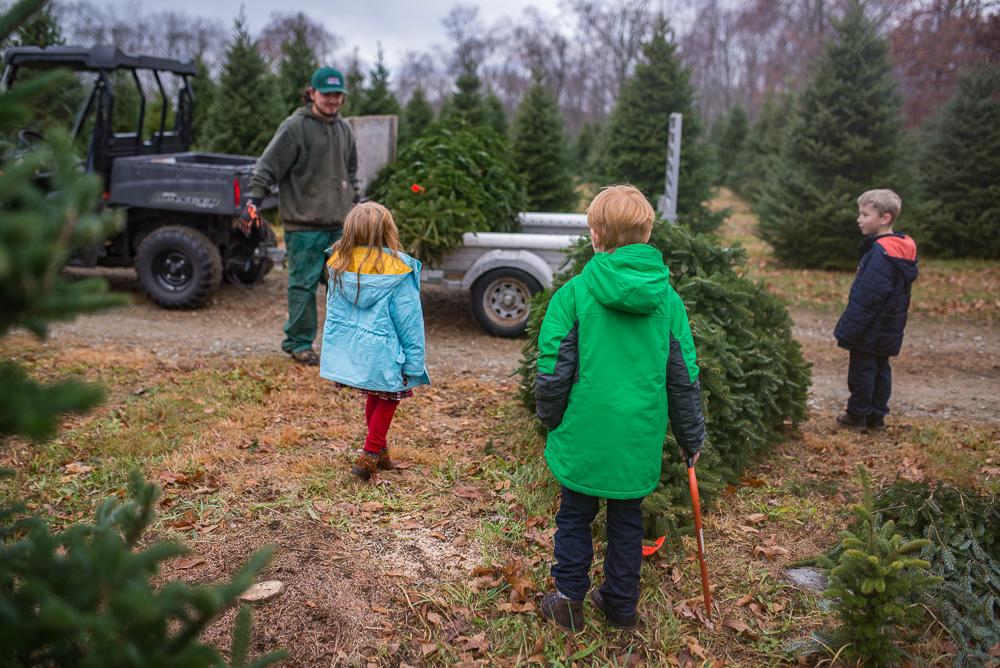 christmas-tree-weekend-2016-5