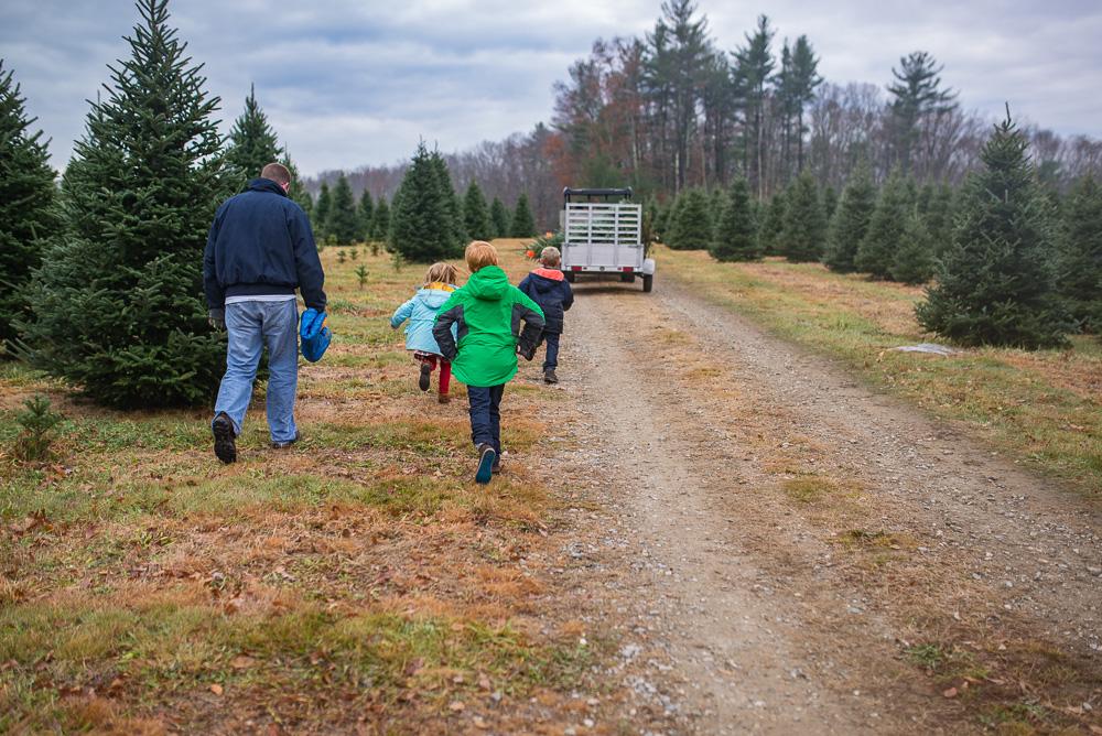 christmas-tree-weekend-2016-6