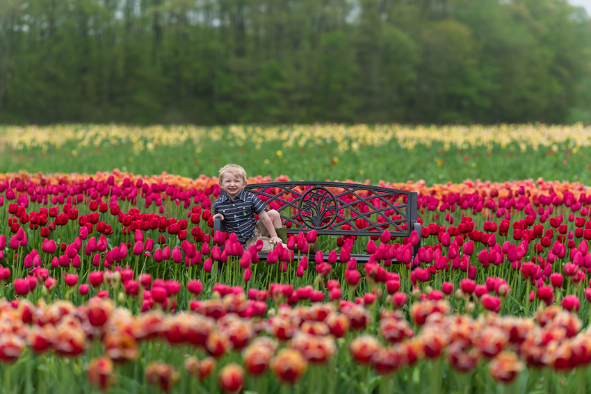 wicked tulips tulip farm photos